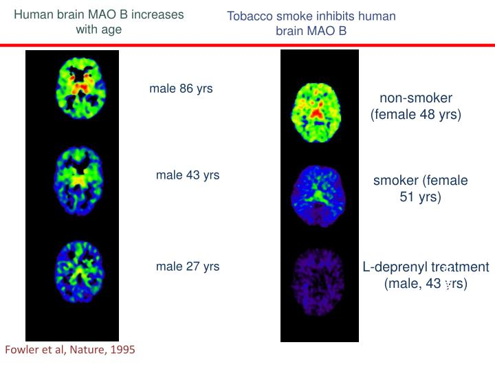 Human brain MAO B increases with age