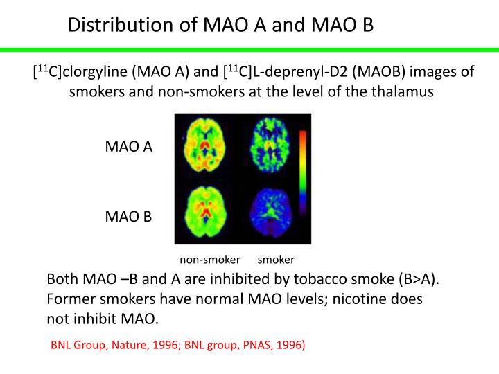 Distribution of MAO A and MAO B