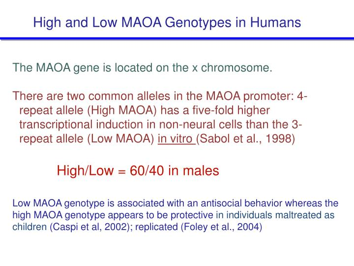 High and Low MAOA Genotypes in Humans