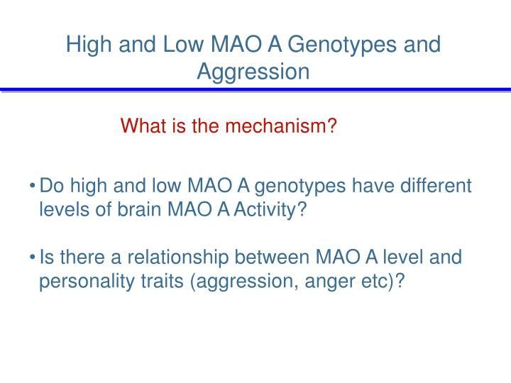 High and Low MAO A Genotypes and Aggression