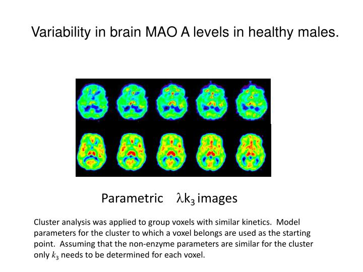 Variability in brain MAO A levels in healthy males.