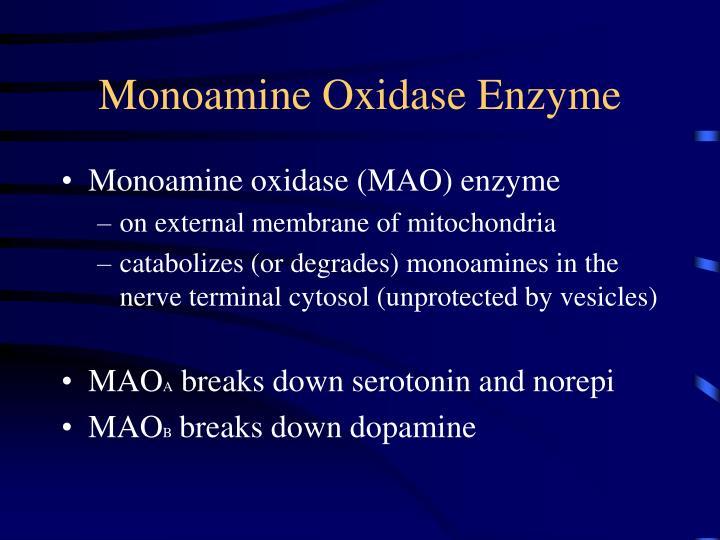 Monoamine Oxidase Enzyme