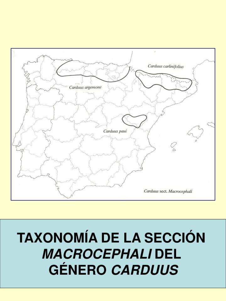 TAXONOMÍA DE LA SECCIÓN