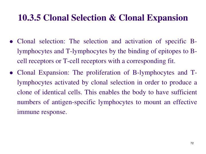 10.3.5 Clonal Selection & Clonal Expansion