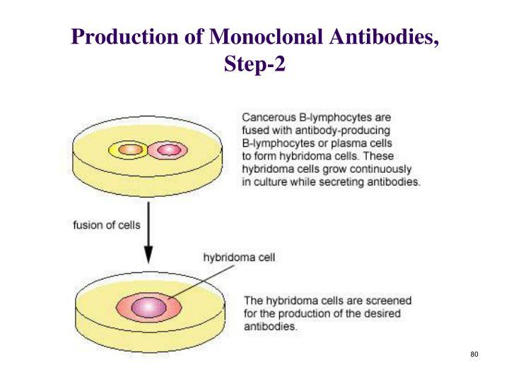 Production of Monoclonal Antibodies, Step-2