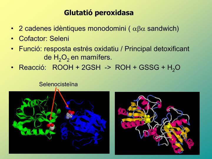 Selenocisteïna