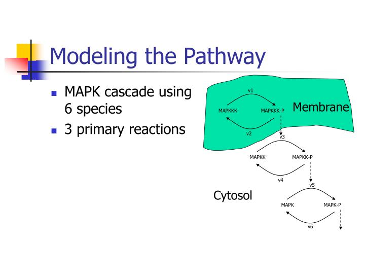 Modeling the pathway