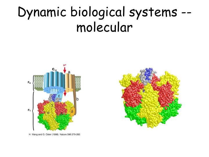 Dynamic biological systems -- molecular