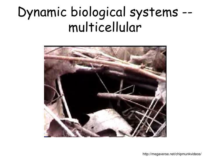 Dynamic biological systems multicellular