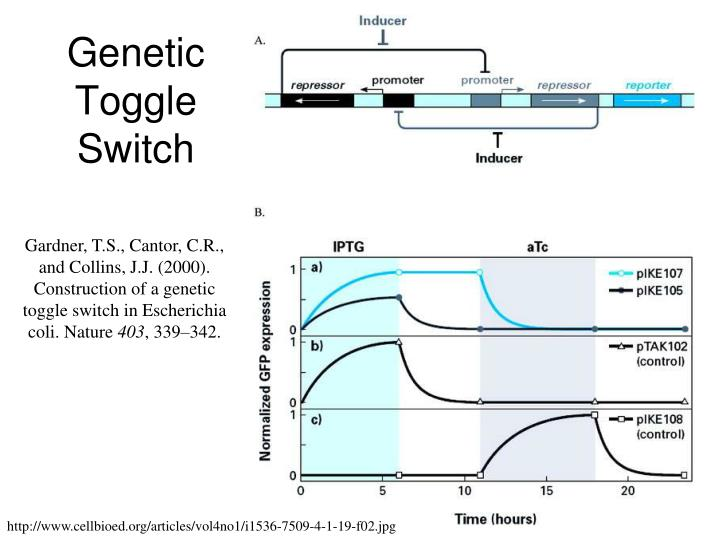 Genetic Toggle Switch
