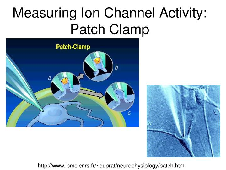 Measuring Ion Channel Activity: Patch Clamp