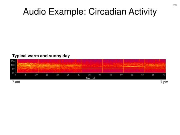 Audio Example: Circadian Activity