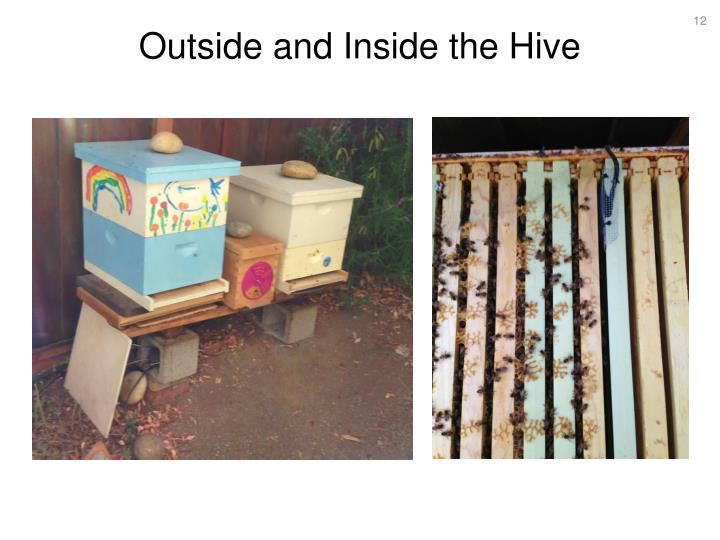 Outside and Inside the Hive