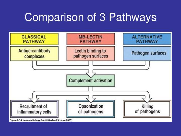 Comparison of 3 Pathways