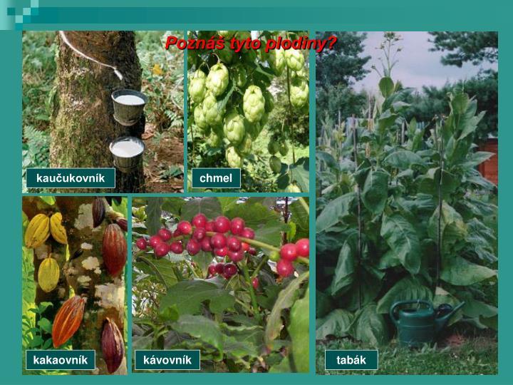 Poznáš tyto plodiny?