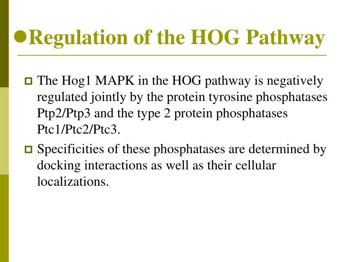 Regulation of the HOG Pathway