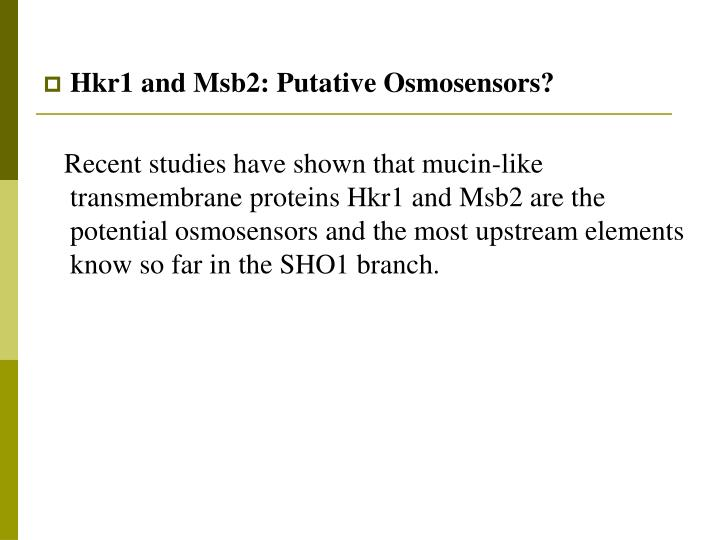 Hkr1 and Msb2: Putative Osmosensors?