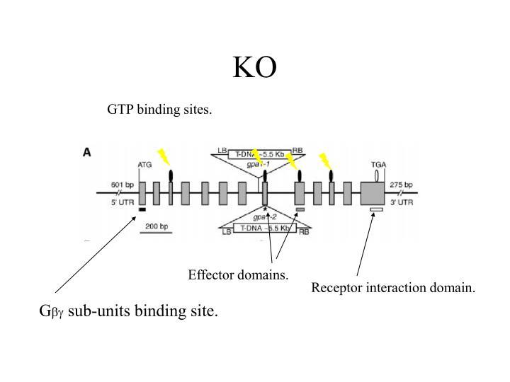 GTP binding sites.