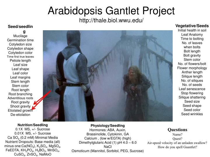Arabidopsis Gantlet Project