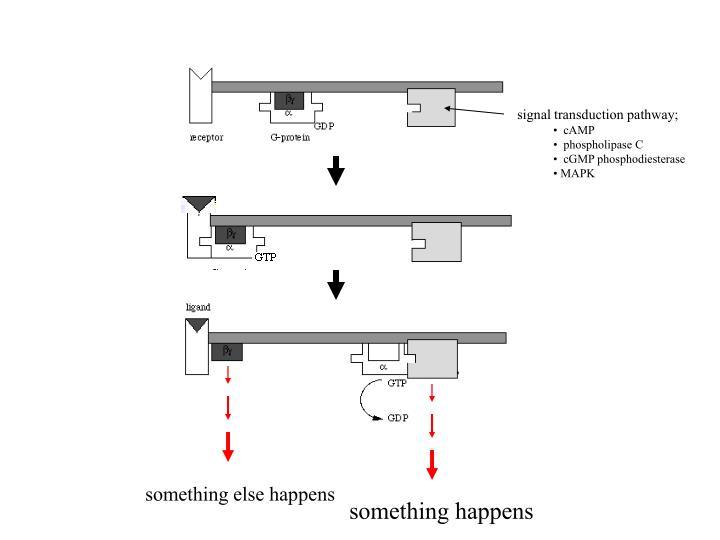 signal transduction pathway;