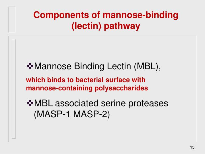 Components of mannose-binding