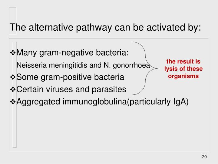 The alternative pathway can be activated by: