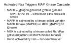 activated ras triggers map kinase cascade