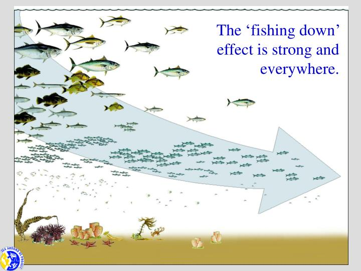 The 'fishing down' effect is strong and everywhere.