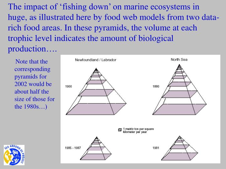 The impact of 'fishing down' on marine ecosystems in huge, as illustrated here by food web models from two data-rich food areas. In these pyramids, the volume at each trophic level indicates the amount of biological production….