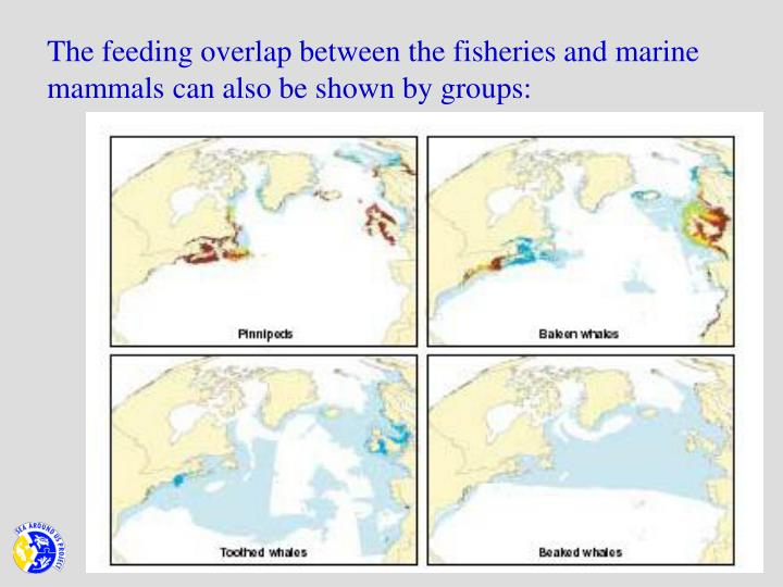 The feeding overlap between the fisheries and marine mammals can also be shown by groups: