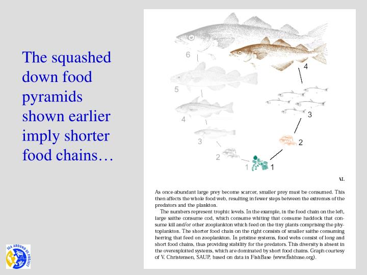 The squashed down food pyramids shown earlier  imply shorter food chains…