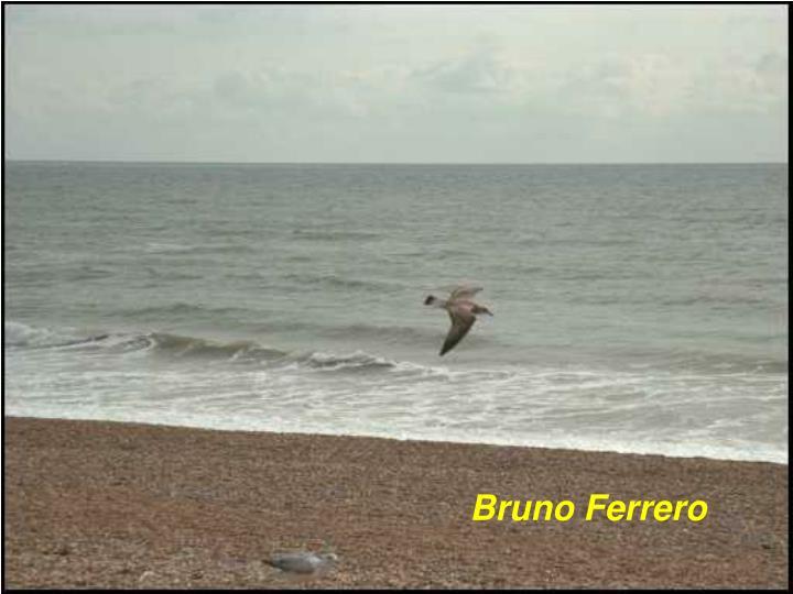 Bruno Ferrero
