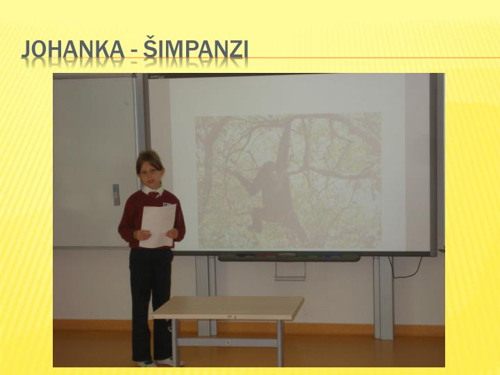 Johanka - šimpanzi