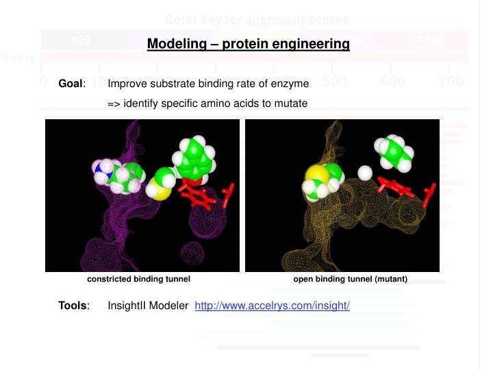 Modeling – protein engineering