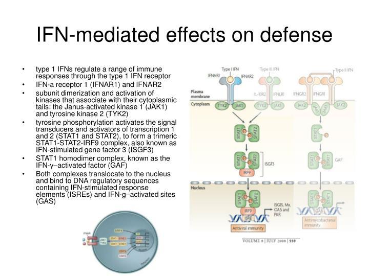 type 1 IFNs regulate a range of immune responses through the type 1 IFN receptor