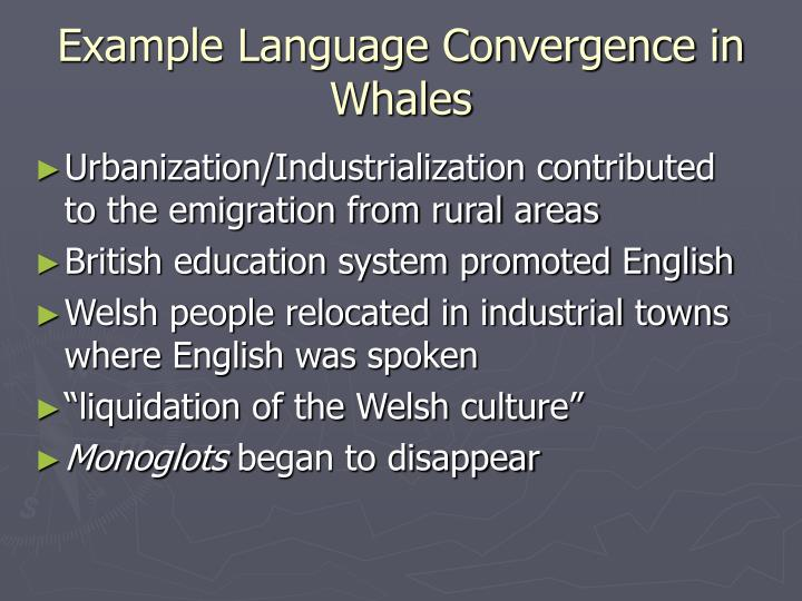 Example Language Convergence in Whales