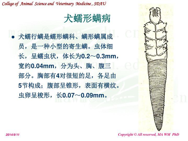 犬蠕行螨是蠕形螨科、螨形螨属成员,是一种小型的寄生螨。虫体细长,呈蠕虫状,体长为