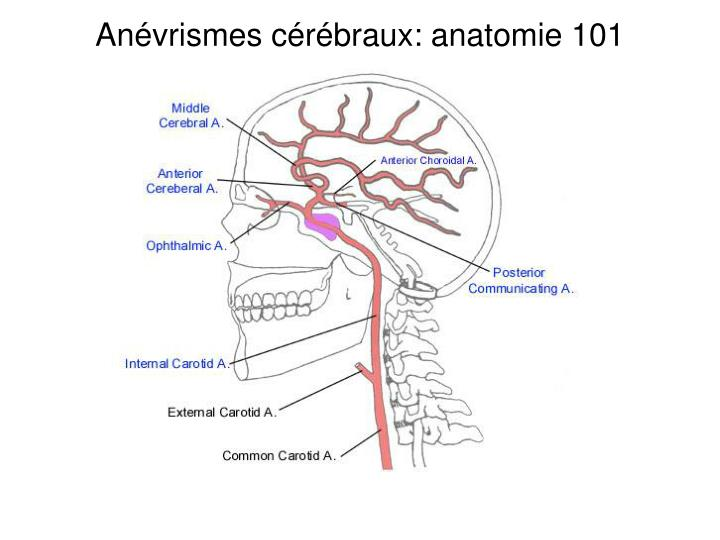 Anévrismes cérébraux: anatomie 101