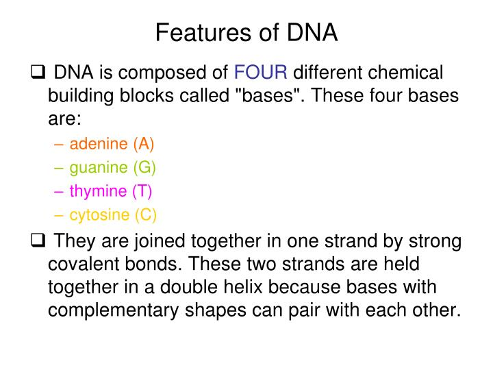 Features of DNA