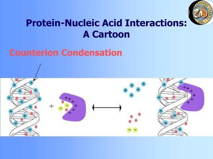 Protein nucleic acid interactions a cartoon