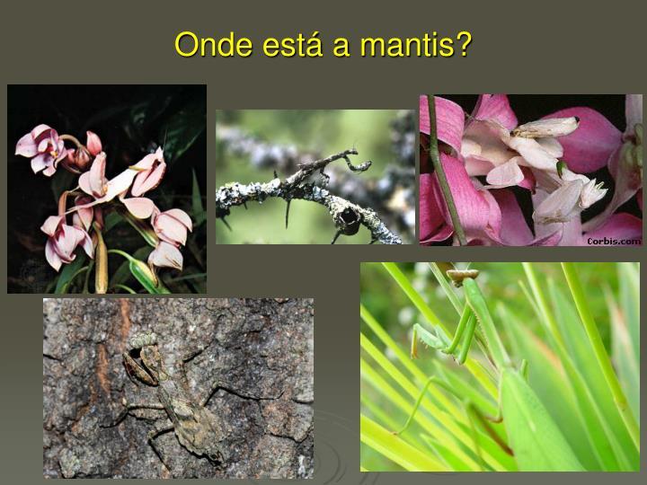 Onde está a mantis?