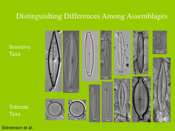 Distinguishing Differences Among Assemblages