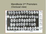 mandibular 2 nd premolars occlusal view