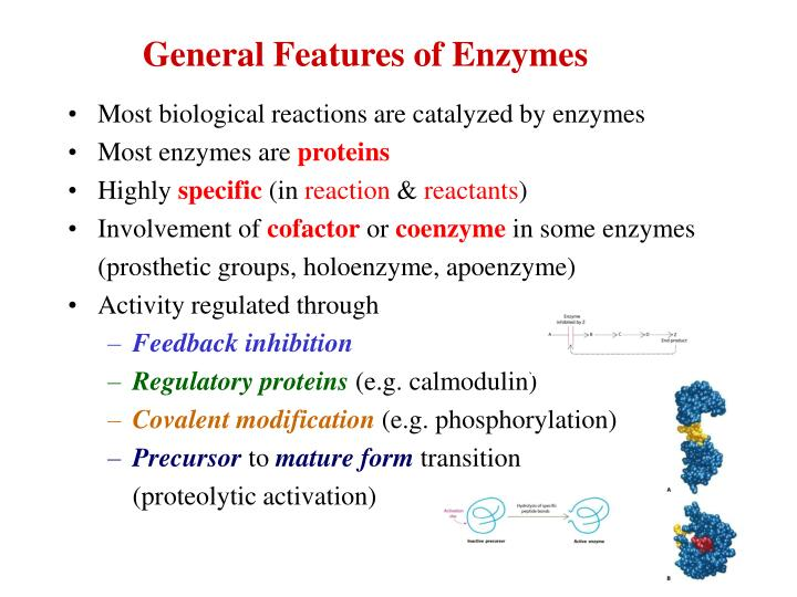 General features of enzymes