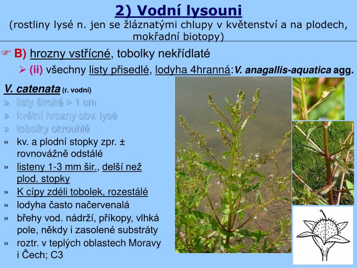 2) Vodní lysouni