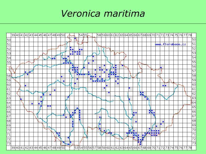 Veronica maritima