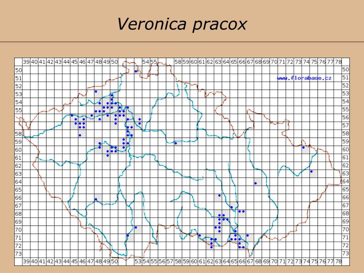 Veronica pracox