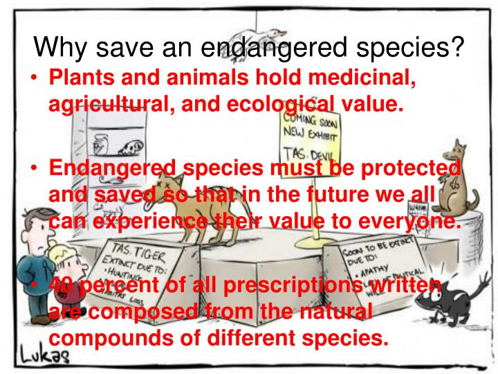 Why save an endangered species?