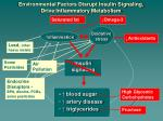 environmental factors disrupt insulin signaling drive inflammatory metabolism