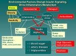 environmental factors disrupt insulin signaling drive inflammatory metabolism2